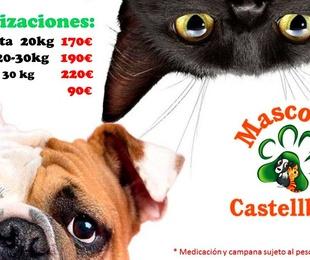 ESTERILIZACIONES PERRAS Y GATAS en Mascotes Castellbell