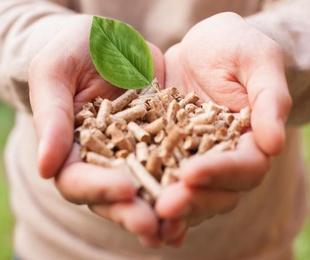 El origen de la biomasa