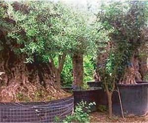 Venta de plantas y mantenimiento de jardines
