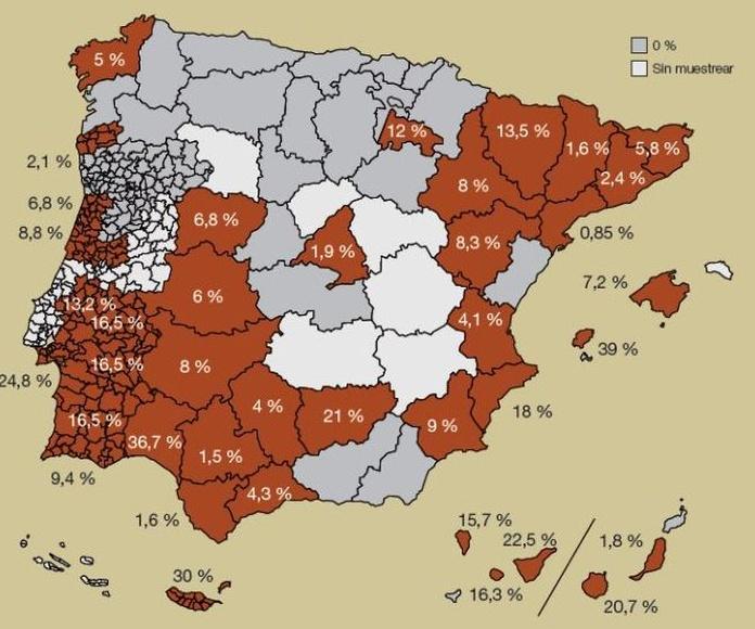 Dirofilaria en España