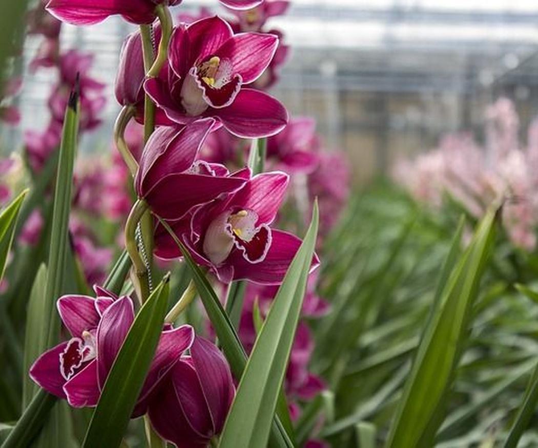 Las flores más comunes en clima seco
