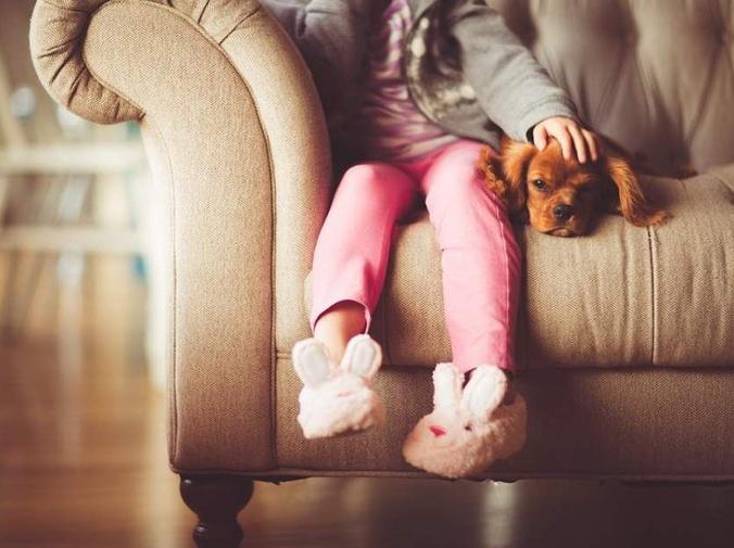 El éxito de los vídeos de mascotas por Internet