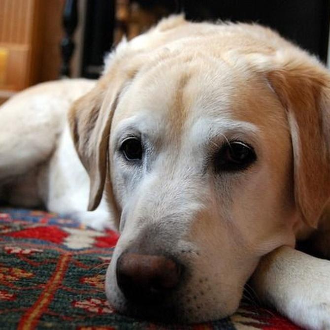 ¿Pueden impedirme tener una mascota si soy propietario?
