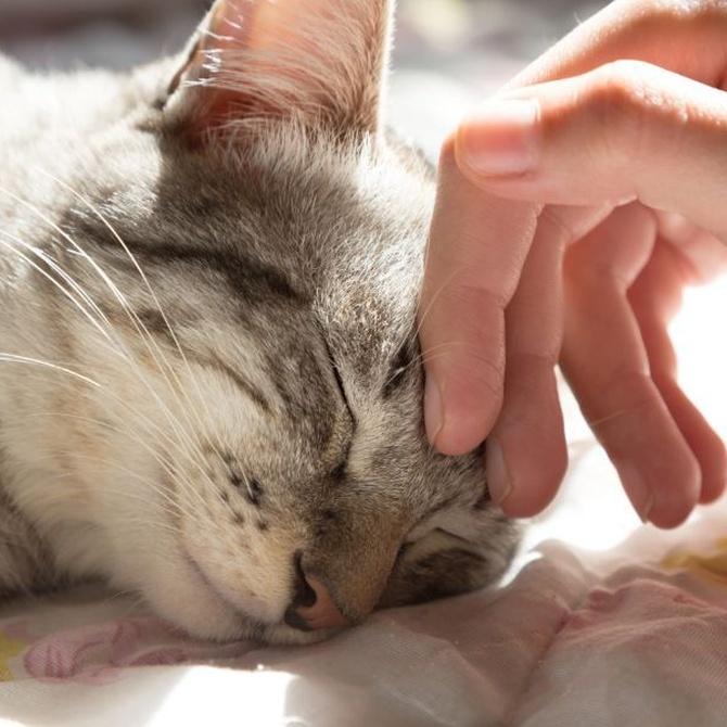 Consejos para mimar a tu gato
