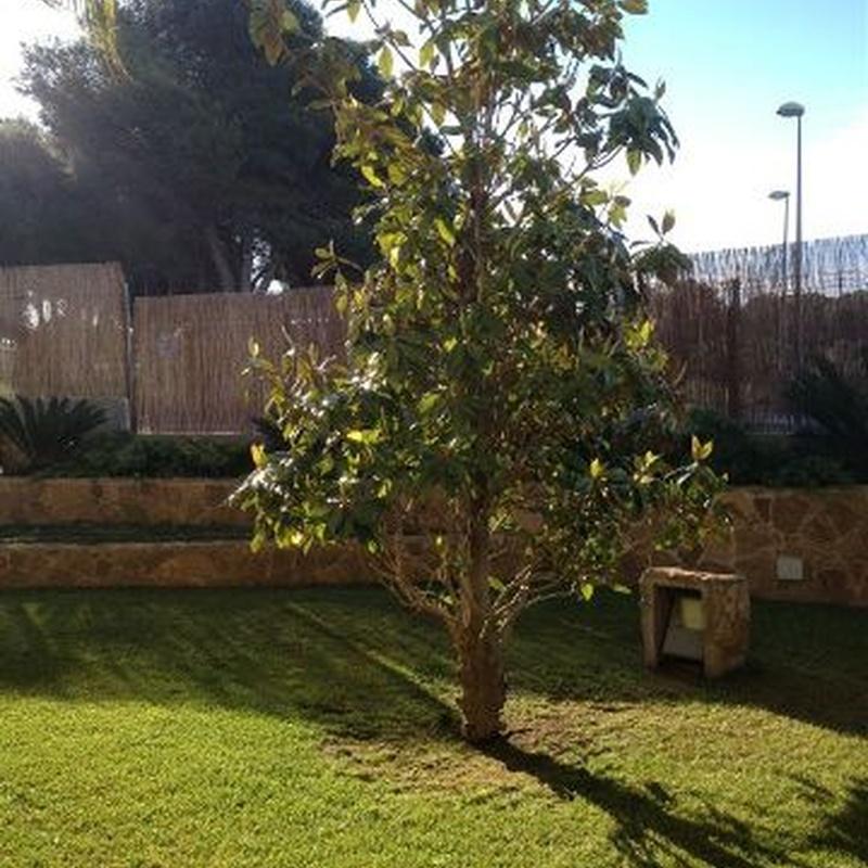 Trasplante y plantación de árboles: Nuestros servicios de Jardinería Bordera