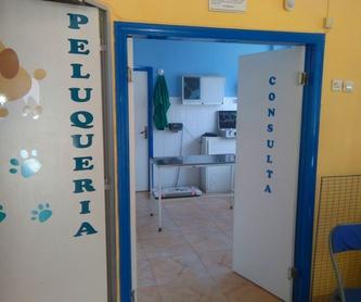 Fotos de Veterinarios   en La Adrada | Clínica Veterinaria La Adrada