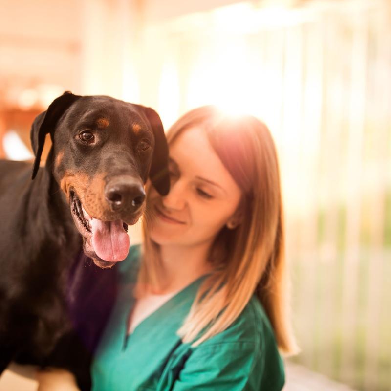 Veterinario: Servicios de Centro Canino Oxican