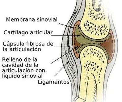 ¿Como reconocer una rotura de menisco?
