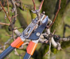 El invierno y la poda de los frutales