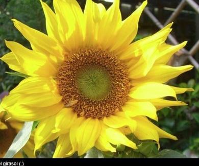 Un estudio muestra cómo 'ven' y 'oyen' las plantas