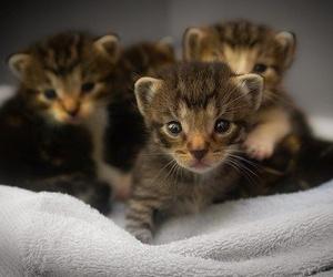 ¿Qué hacer si encuentras un gato recién nacido?