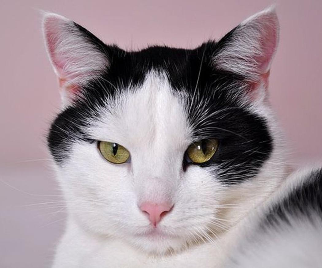 El corte de pelo a los gatos
