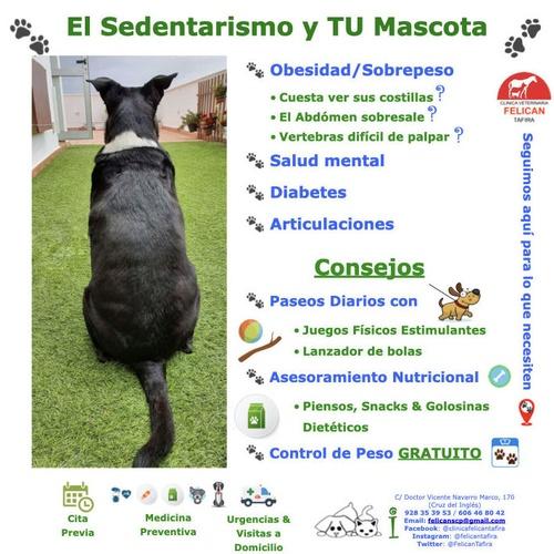 El Sedentarismo y TU Mascota