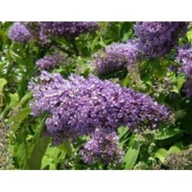 Budleida: Productos de Danimayos Crea Tu Jardin