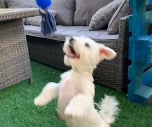 Nick jugando, necesario para todo cachorro para su adecuado desarrollo