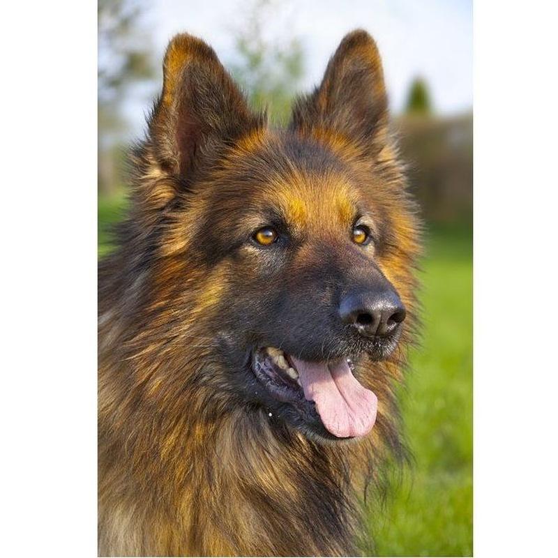 Peluquería canina: Servicios de Vets Centre Veterinari Girona