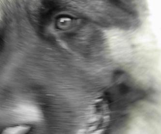 Spa canino : Servicios de Hospital Veterinario Constitución