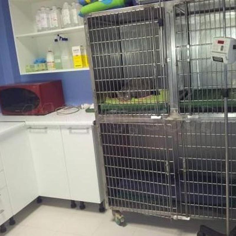 Hospitalización: Tratamientos y servicios de Clínica Veterinaria Camarma