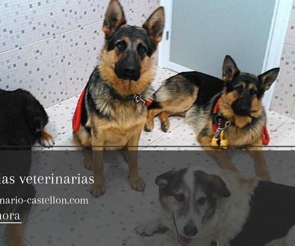 Clínica veterinaria en Almazora | Clínica Veterinaria Sant Marc