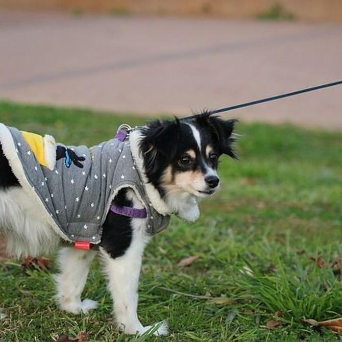Beneficios de la ropa para perros en invierno