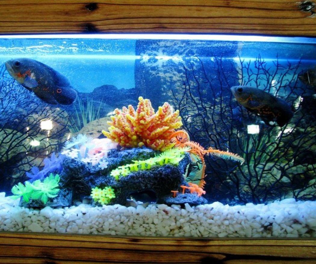 Consejos para cuidar tu acuario