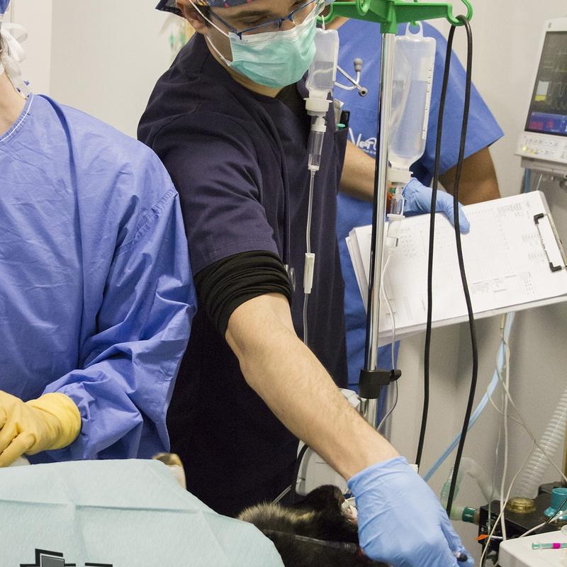 Anestesia: Servicios de Centro Veterinario Trivet
