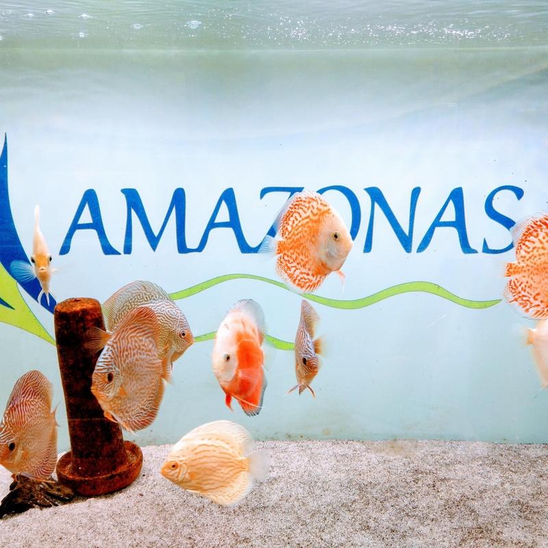 Peces: Productos y Servicios de Amazonas 1