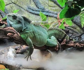 Veterinario de reptiles en Madrid