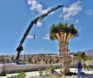Extracción de árboles con camón grúa
