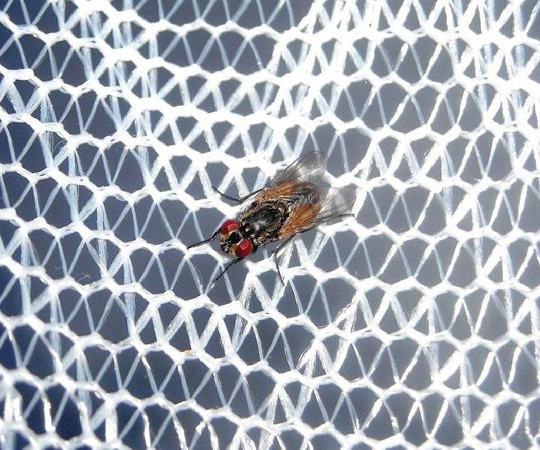 ¿Por qué instalar mosquiteras en verano?
