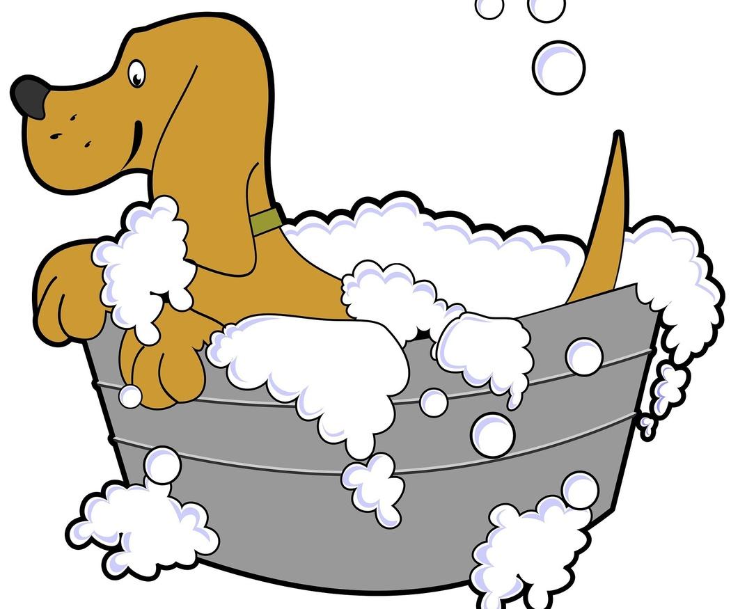 El champú más adecuado para tu perro