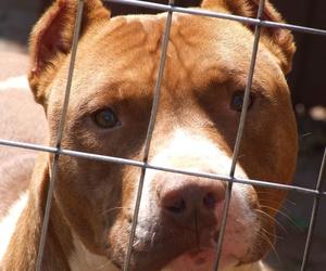 Reconocimiento médico pata tenencia de animales peligrosos
