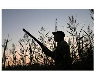 Renovación del permiso de armas: Servicios de Medipsico, S.L.