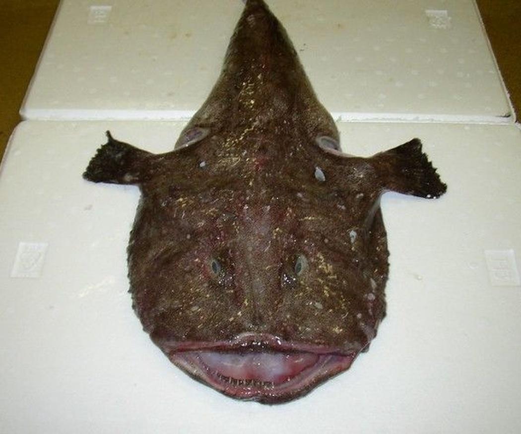 El pixín, el pescado asturiano más característico