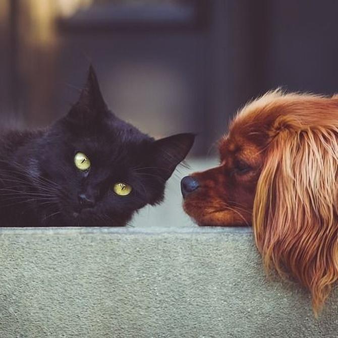 Conoce el DHA, imprescindible para tu mascota