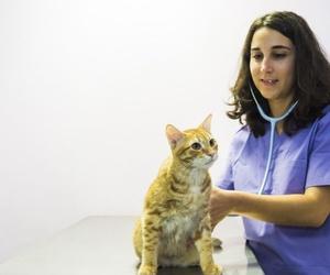 Alergias en mascotas en Santa Cruz de Tenerife