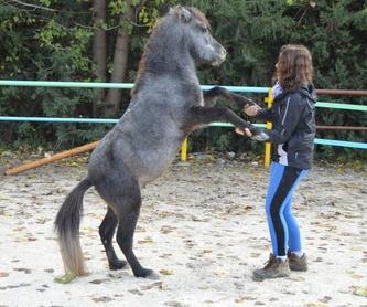 Pupilaje de caballos en cesión: Servicios de Club Hípico de Cenes