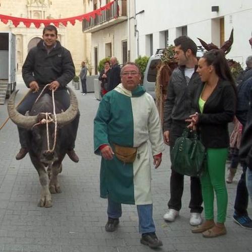 Alquiler de búfalos de agua en la Comunidad Valenciana