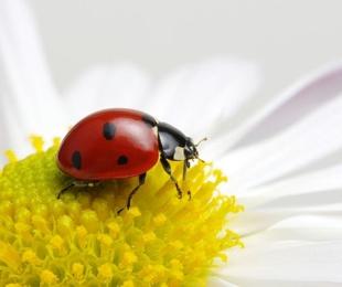 Jardines con insectos