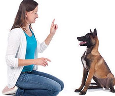Educación del cachorro