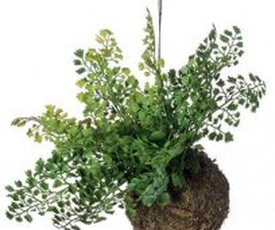 Planta decorativa techo 419165