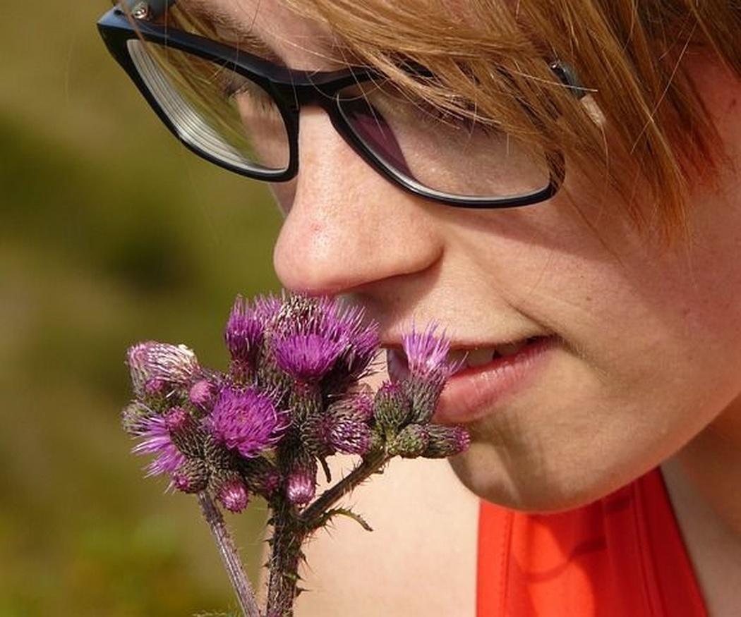¿De dónde procede el olor de las flores?