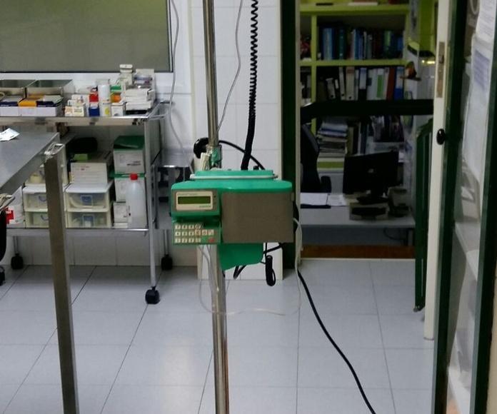 Cirugía general: Servicios de Clínica Veterinaria San Lucas
