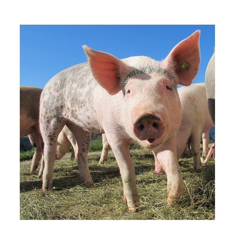 Tripas naturales de cerdo