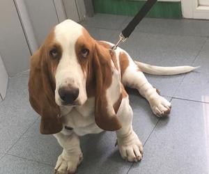 Peluquería canina: Recientemente vino a bañarse Horacio! Nuestro Rastreator particular