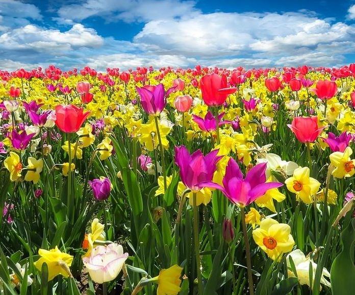 ¿Porque hay que ayudar al hígado a drenar en primavera?