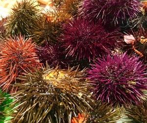 Comprar peix i marisc a Mataró