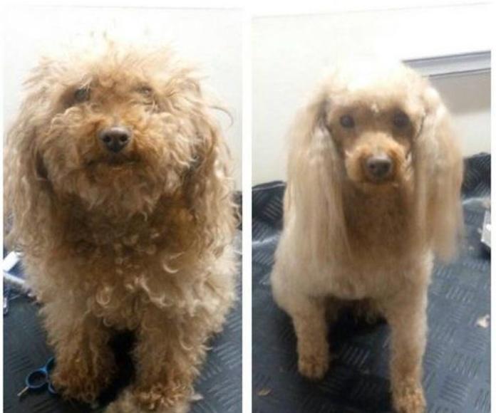 Peluquería canina y felina: Servicios de Jabondog