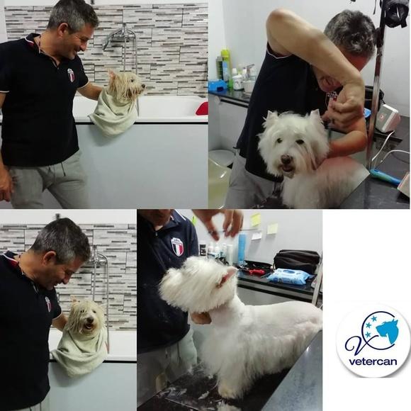 Peluquería de mascota: Servicios de Vetercan