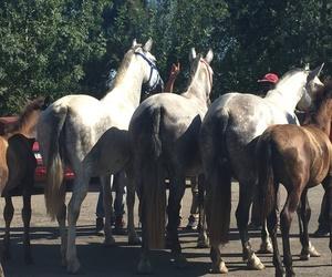 Tercera generación dedicada al mundo del caballo